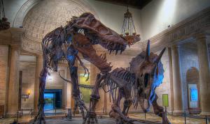tamkin dinosaur exhibit